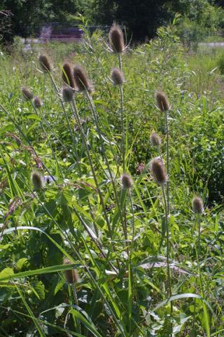 Image http://bioimages.vanderbilt.edu/lq/baskauf/wdifu2-wp28514.jpg