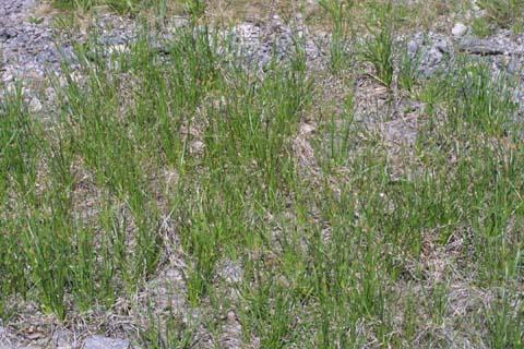 Image http://bioimages.vanderbilt.edu/lq/baskauf/welco2-wpmass21851.jpg