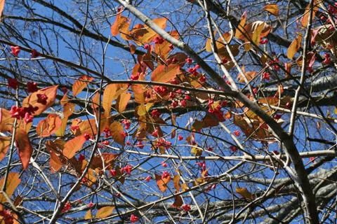 Image http://bioimages.vanderbilt.edu/lq/baskauf/weuat3-frdistant56185.jpg