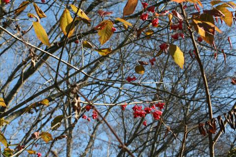 Image http://bioimages.vanderbilt.edu/lq/baskauf/weuat3-frdistant56187.jpg