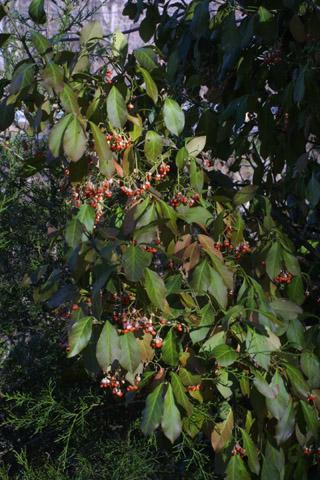 Image http://bioimages.vanderbilt.edu/lq/baskauf/weufo5-frdistant30641.jpg