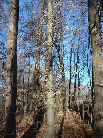 Image http://bioimages.vanderbilt.edu/lq/baskauf/wfagr--wpwinterd0127.jpg