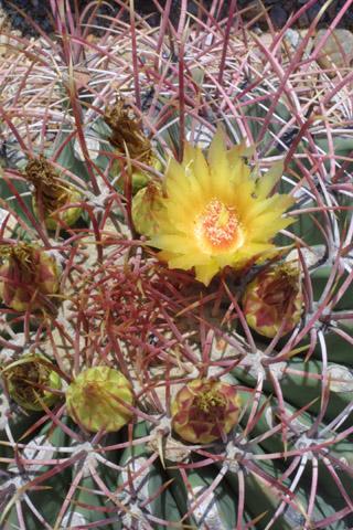 Image http://bioimages.vanderbilt.edu/lq/baskauf/wfeem--ap14903.jpg
