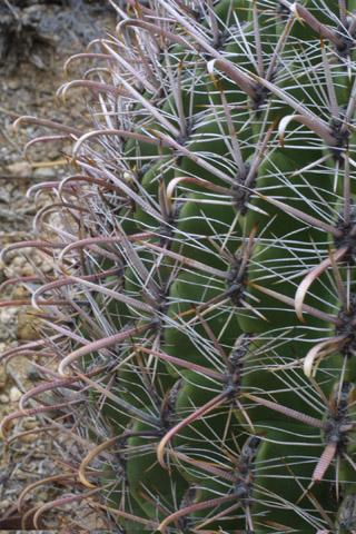 Image http://bioimages.vanderbilt.edu/lq/baskauf/wfewi--st14335.jpg