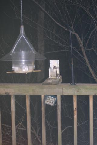 Image http://bioimages.vanderbilt.edu/lq/baskauf/wflying-squirrel-31321.jpg