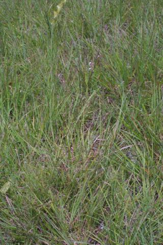 Image http://bioimages.vanderbilt.edu/lq/baskauf/wgafi2-wp36908.jpg