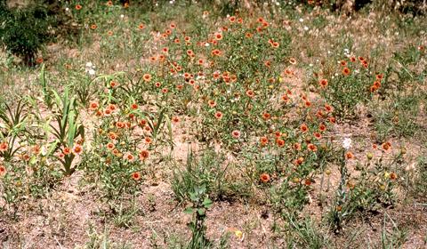 Image http://bioimages.vanderbilt.edu/lq/baskauf/wgaill-wp00117.jpg