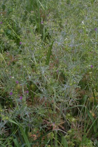 Image http://bioimages.vanderbilt.edu/lq/baskauf/wgedi--wp21110.jpg