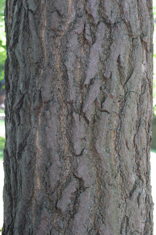 Image http://bioimages.vanderbilt.edu/lq/baskauf/wgibi2-brlarge11958.jpg