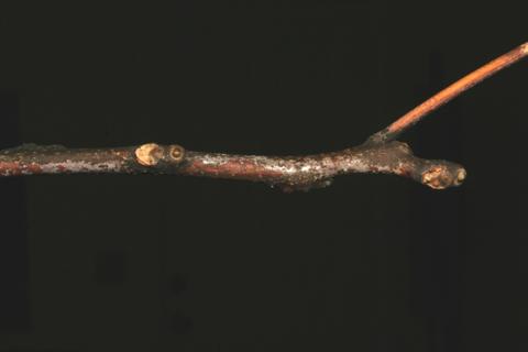 Image http://bioimages.vanderbilt.edu/lq/baskauf/wgydi--twwinter63779.jpg