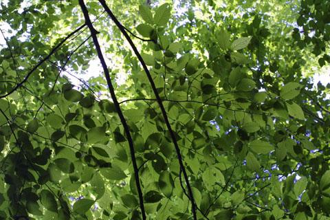 Image http://bioimages.vanderbilt.edu/lq/baskauf/whate3-lfdistant11551.jpg
