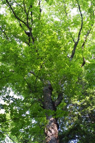 Image http://bioimages.vanderbilt.edu/lq/baskauf/whate3-wplookup-giant11558.jpg
