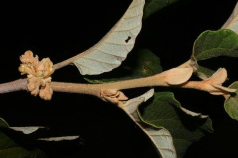 Image http://bioimages.vanderbilt.edu/lq/baskauf/whave2-tw55789.jpg