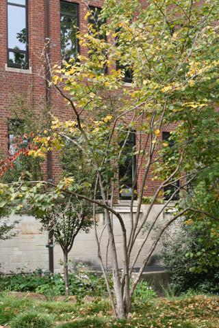 Image http://bioimages.vanderbilt.edu/lq/baskauf/whavi4-wp55738.jpg