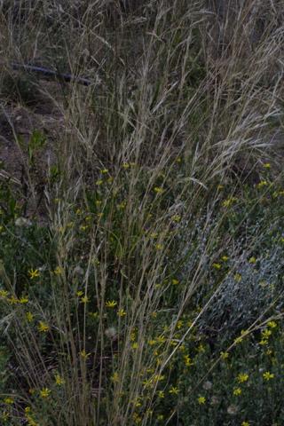 Image http://bioimages.vanderbilt.edu/lq/baskauf/whecoc8wp43073.jpg