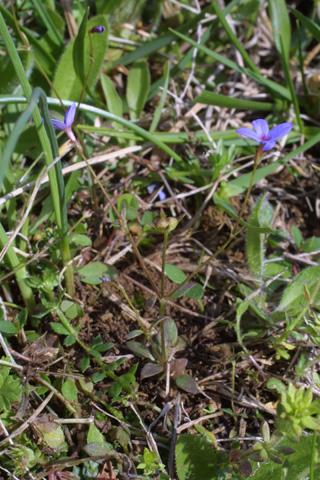 Image http://bioimages.vanderbilt.edu/lq/baskauf/whopu3-wp18766.jpg