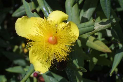 Image http://bioimages.vanderbilt.edu/lq/baskauf/whyfr--fl27637.jpg