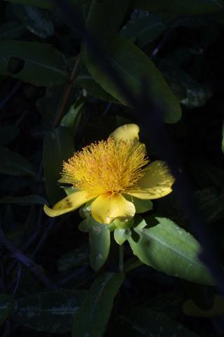Image http://bioimages.vanderbilt.edu/lq/baskauf/whyfr--flside12789.jpg