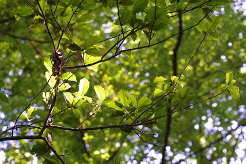 Image http://bioimages.vanderbilt.edu/lq/baskauf/wilop--wpbranch11597.jpg