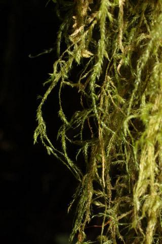 Image http://bioimages.vanderbilt.edu/lq/baskauf/wismy2-wpclose40651.jpg