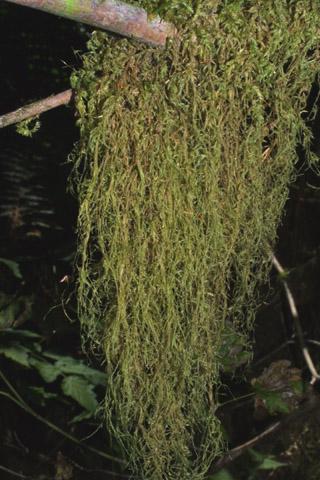 Image http://bioimages.vanderbilt.edu/lq/baskauf/wismy2-wpdistant40646.jpg