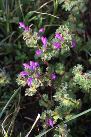 Image http://bioimages.vanderbilt.edu/lq/baskauf/wlaam--flinflor10433.jpg