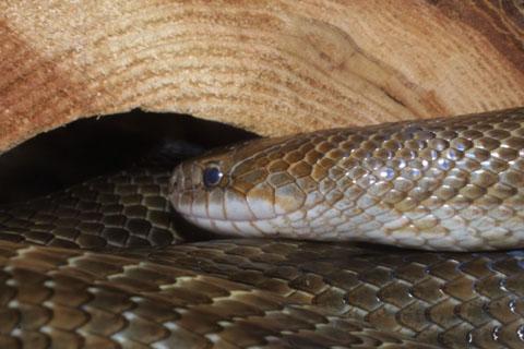 Image http://bioimages.vanderbilt.edu/lq/baskauf/wlamcal37549.jpg