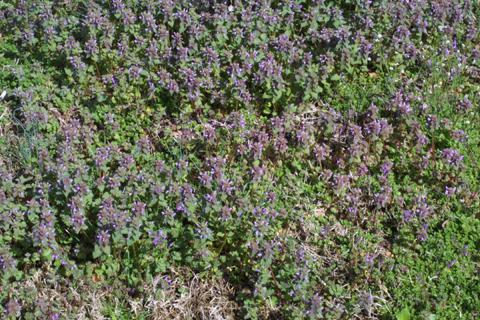 Image http://bioimages.vanderbilt.edu/lq/baskauf/wlapu2-wpmass17619.jpg