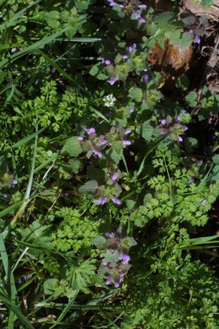 Image http://bioimages.vanderbilt.edu/lq/baskauf/wlapu2-wpseveral17611.jpg