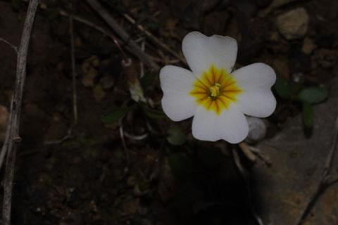 Image http://bioimages.vanderbilt.edu/lq/baskauf/wleexe-flfront31608.jpg