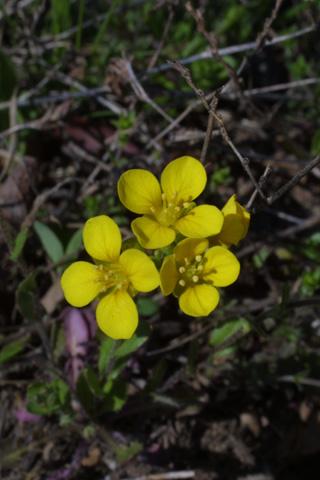 Image http://bioimages.vanderbilt.edu/lq/baskauf/wlele6-fl17988.jpg