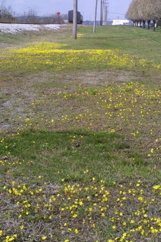 Image http://bioimages.vanderbilt.edu/lq/baskauf/wlest7-wpmass31192.jpg