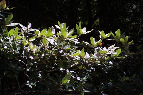 Image http://bioimages.vanderbilt.edu/lq/baskauf/wlide3-lfdistant41879.jpg
