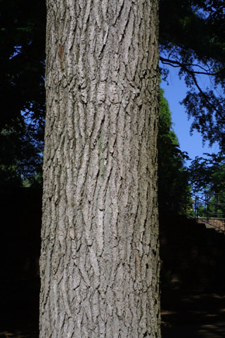 Image http://bioimages.vanderbilt.edu/lq/baskauf/wlist2-brlarge10920.jpg