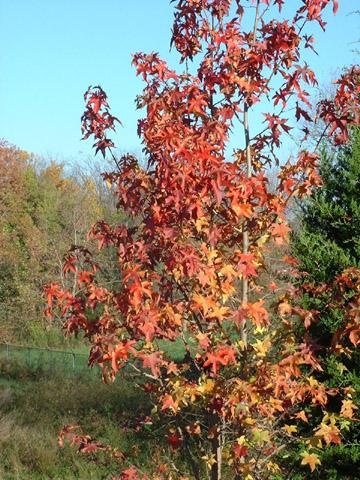 Image http://bioimages.vanderbilt.edu/lq/baskauf/wlist2-lffalld0995.jpg