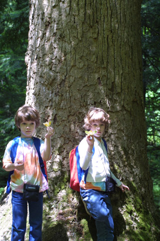 Image http://bioimages.vanderbilt.edu/lq/baskauf/wlitu--wplrg-w-girls11486.jpg