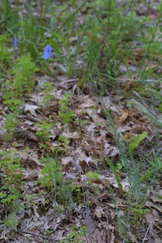 Image http://bioimages.vanderbilt.edu/lq/baskauf/wlius--wp25230.jpg