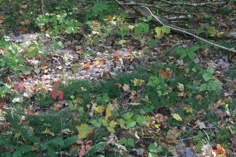 Image http://bioimages.vanderbilt.edu/lq/baskauf/wlydi3-wpdistant70764.jpg