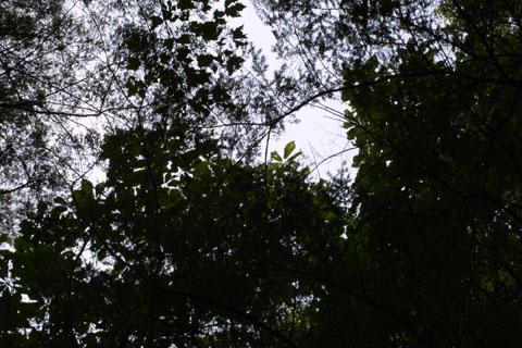 Image http://bioimages.vanderbilt.edu/lq/baskauf/wmafr--lfdistant38238.jpg