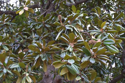 Image http://bioimages.vanderbilt.edu/lq/baskauf/wmagr4-frin-fruit10209.jpg