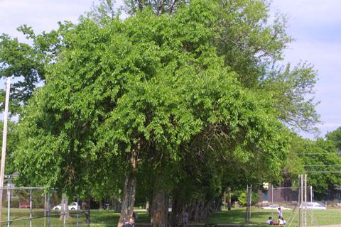 Image http://bioimages.vanderbilt.edu/lq/baskauf/wmapo--wpseveral11118.jpg