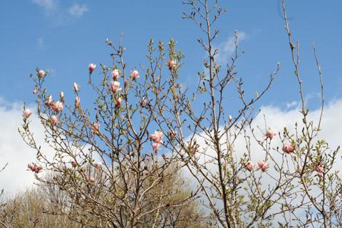 Image http://bioimages.vanderbilt.edu/lq/baskauf/wmaso9-fldistant50736.jpg