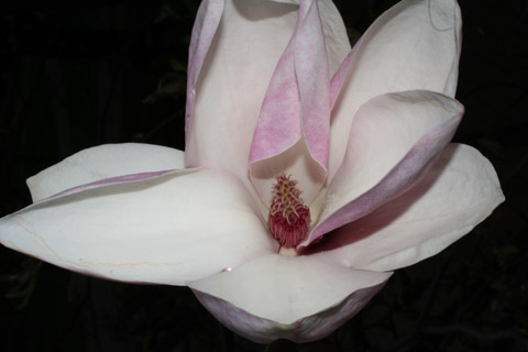 Image http://bioimages.vanderbilt.edu/lq/baskauf/wmaso9-flfront50743.jpg