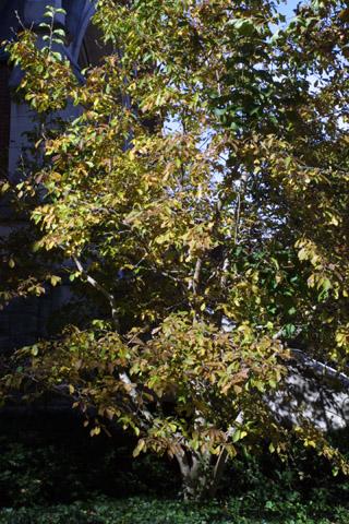 Image http://bioimages.vanderbilt.edu/lq/baskauf/wmaso9-wp43728.jpg