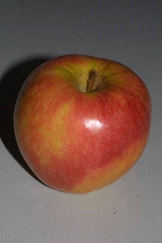 Image http://bioimages.vanderbilt.edu/lq/baskauf/wmasy2-frside30892.jpg