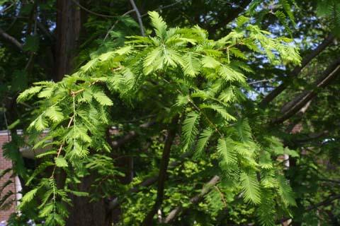 Image http://bioimages.vanderbilt.edu/lq/baskauf/wmegl8-lfseveral22407.jpg