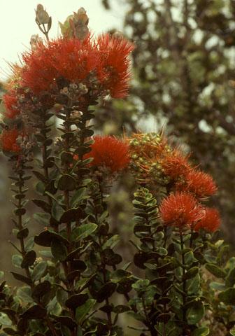 Image http://bioimages.vanderbilt.edu/lq/baskauf/wmetro-lfseveral04106.jpg