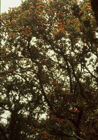 Image http://bioimages.vanderbilt.edu/lq/baskauf/wmetro-wpbig-lookup04026.jpg