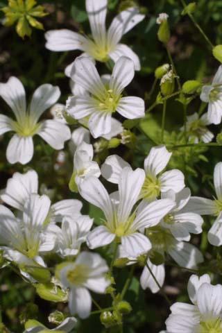 Image http://bioimages.vanderbilt.edu/lq/baskauf/wmipa6-flfront21336.jpg