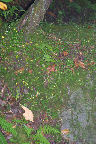 Image http://bioimages.vanderbilt.edu/lq/baskauf/wmire--wpdistant37221.jpg